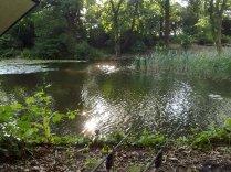 Reed Swim